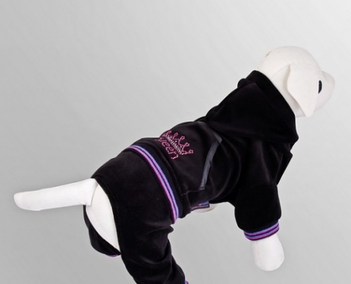 Tracksuit - Queen - Black - dog clothing, dog apparel, dog clothes - Essenti Enterprises, LLC - importer, exporter, supplier, distributor of pet products